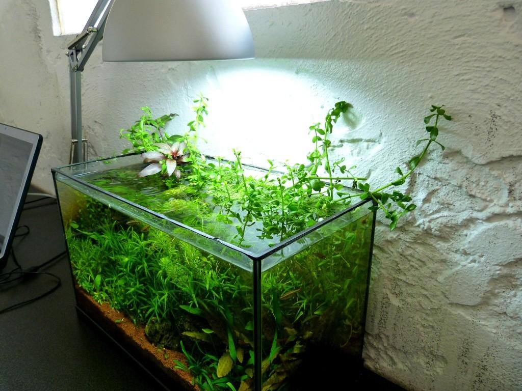éclairage d'un aquarium ouvert