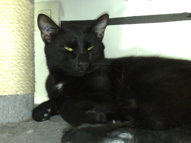 halloween magnifique chat noir. Black Bedroom Furniture Sets. Home Design Ideas