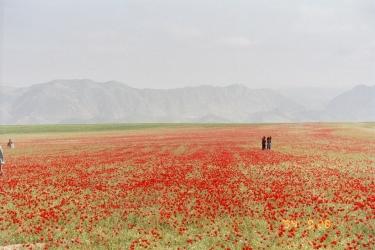 دشت شادیان مزار شریف ..بیا بریم به مزار سیر گل لاله زار