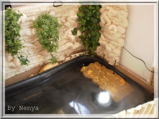Fabrication d 39 un bassin int rieur aqua d butant for Fabriquer une fontaine interieur