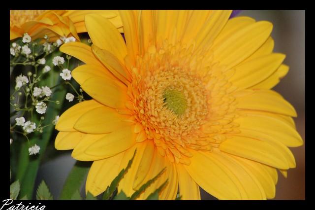 020010 dans fleurs
