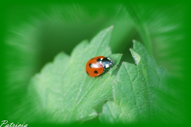 02511 dans insectes