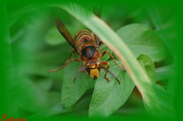 03312 dans insectes