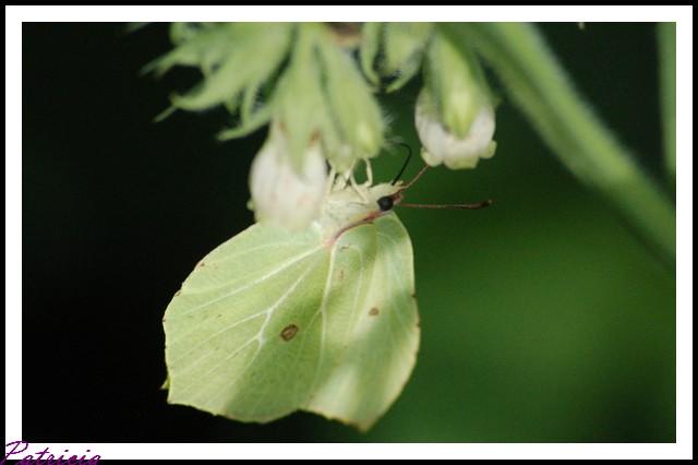 04911 dans insectes