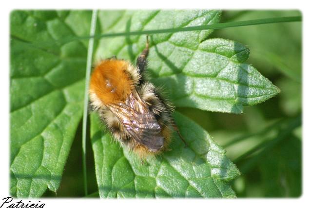 06011 dans insectes