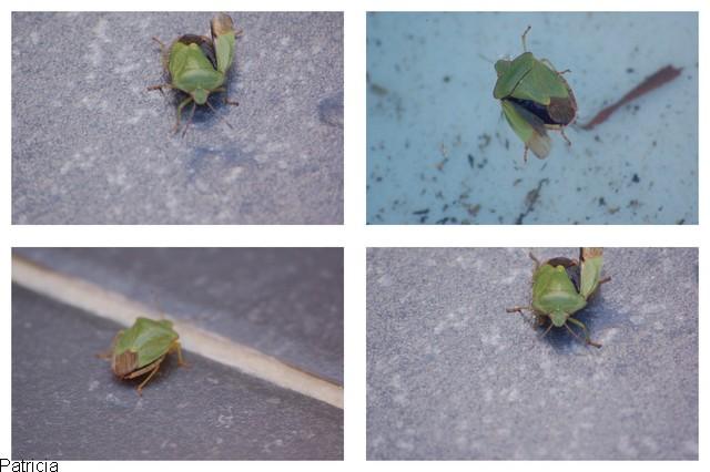 insectes. dans insectes 0810