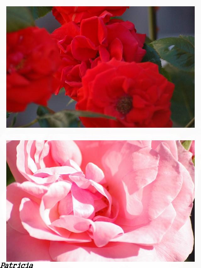 bonne journée dans fleurs 10710
