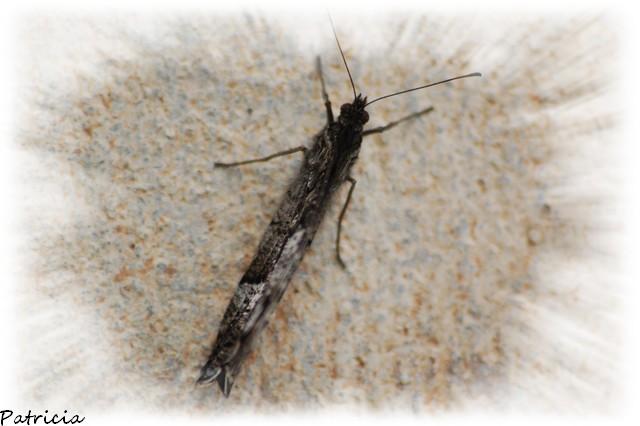 papillon dans animaux 23910