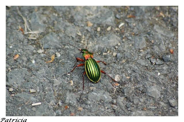 insecte dans nature 59210