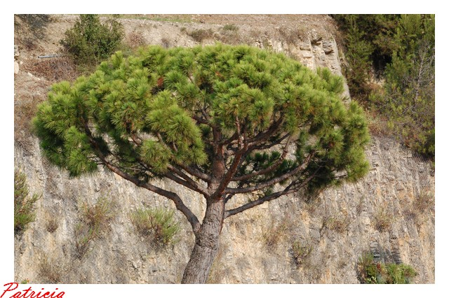 un arbre dans nature arbre10