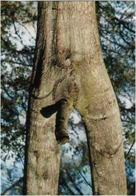 image210 dans nature