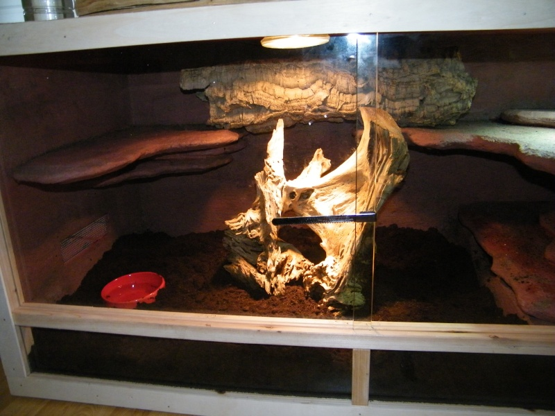 terrarium femelle acanthurus mat riel terrariophile installations le monde des reptiles. Black Bedroom Furniture Sets. Home Design Ideas