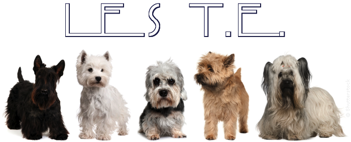 Forum Terriers d'�cosse - Westie - Scottish - Cairn - Skye - Dandie