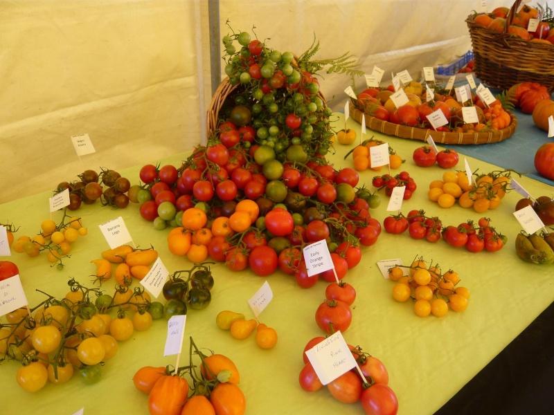 tomate11.jpg