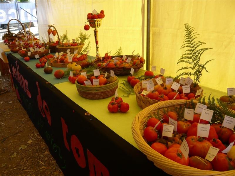 tomate12.jpg