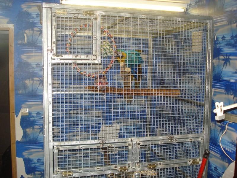 Cage de soin faite maison pour grand perroquets - Grille indiciaire secretaire medicale ...