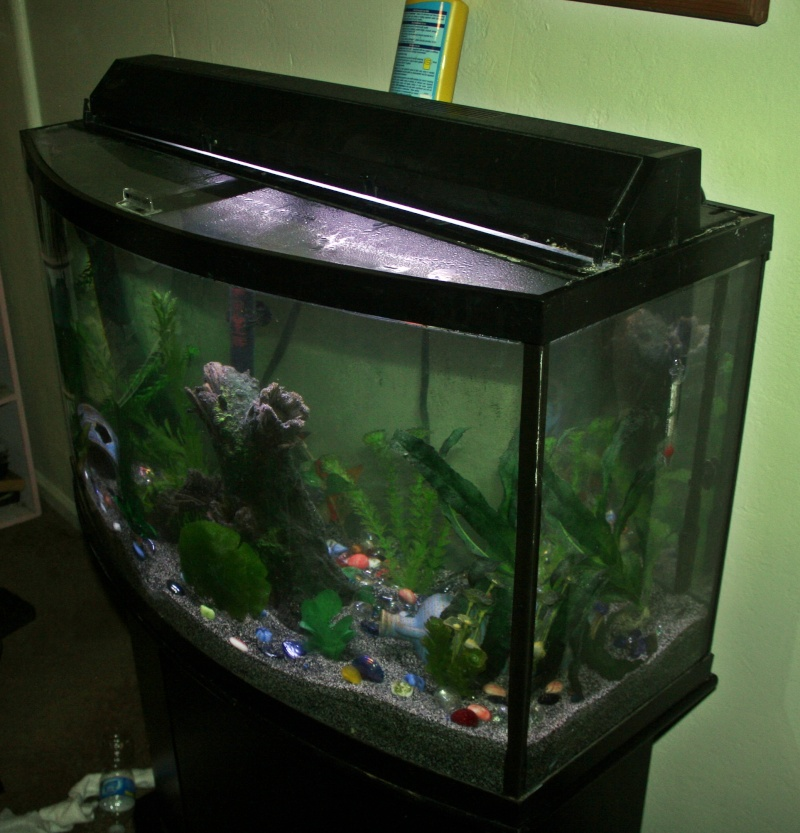 100 gallon fish tank bow front 100 gallon bow front
