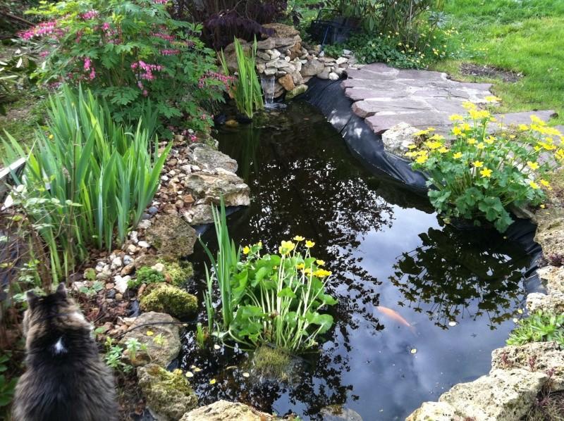 Design bassin poisson rouge sans filtre limoges 1626 limoges bordeaux blablacar limoges - Bassin poisson rouge sans filtre roubaix ...