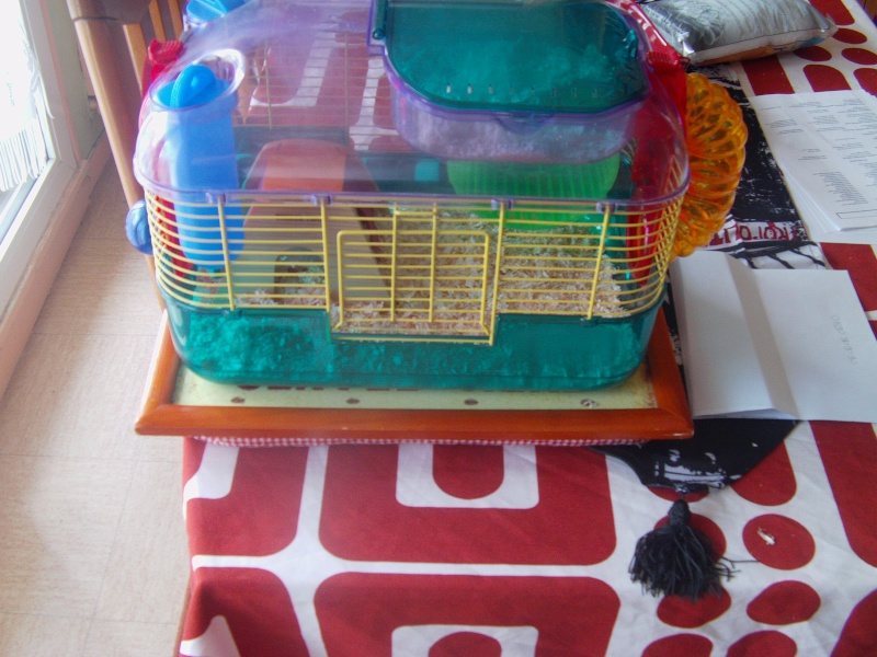 hamsters vend cage petit rongeur hamster russe ou. Black Bedroom Furniture Sets. Home Design Ideas