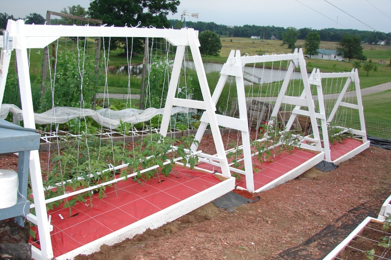 string trellis for tomato
