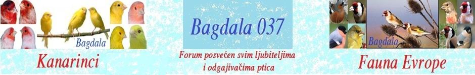 BAGDALA037