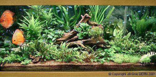 aquarium nicolas menigoz rena 120 l. Black Bedroom Furniture Sets. Home Design Ideas