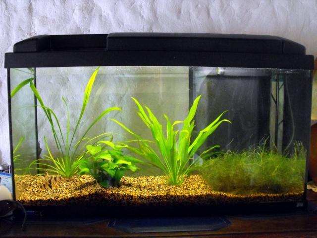 Aquarium nicolas menigoz rena 120 l for Aquarium rena