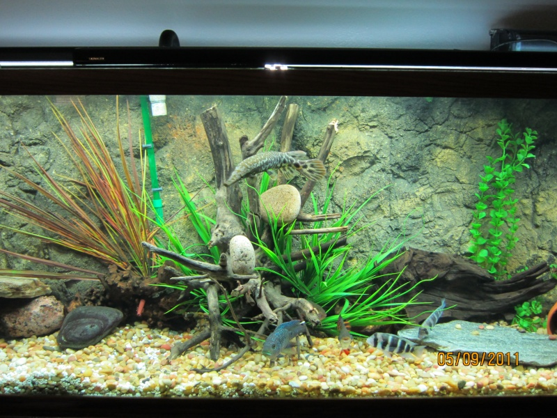 My fish tank and new 3d background for 3d fish tank