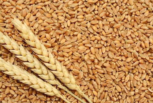 wheat-10.jpg